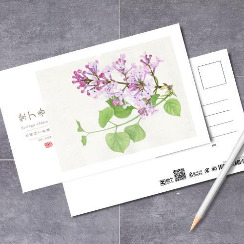 《草木襭之》手绘植物画明信片